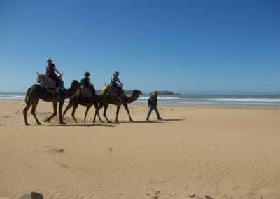 Essaouira Camel trip 1