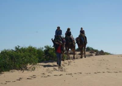 Essaouira Camel trip